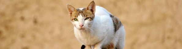General Image - Cat5