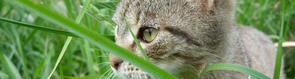 General Image - Cat in Grass6
