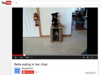 image for Dogs in Chairs: the Story Behind the Video