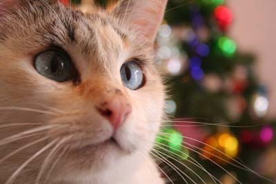 image for Holiday Safety and Your Pets