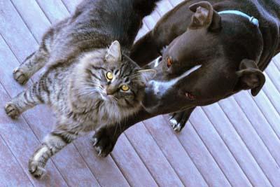 image for National Animal Disaster Preparedness Day