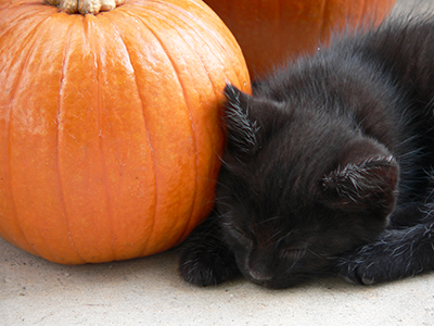 image for Halloween Safety Tips for Your Dog and Cat
