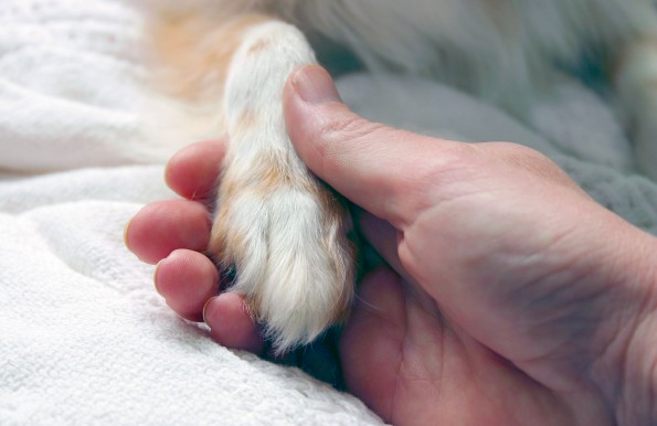 image for Caring for Your Dog's Paws
