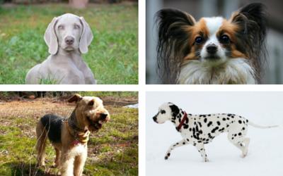 image for The Origins of 10 Nicknames of Dog Breeds