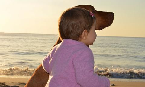 image for Tips for Preventing Dog Bites