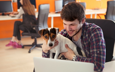 image for 5 tips for a positive Take Your Dog to Work Day