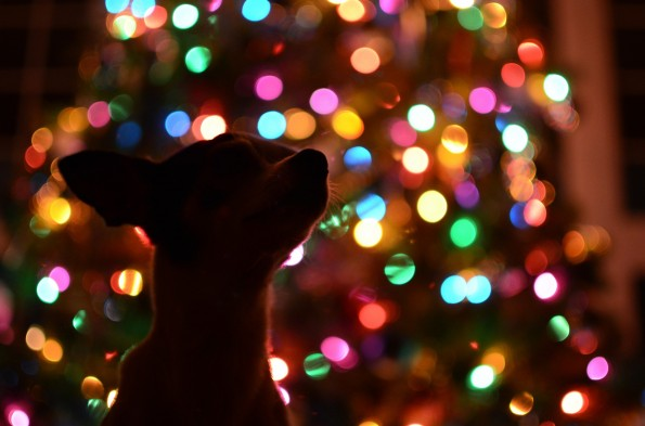 image for Pet Proofing Your Holiday Decorations